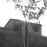 Foto del profilo di Azienda Agricola Poggio della Stella